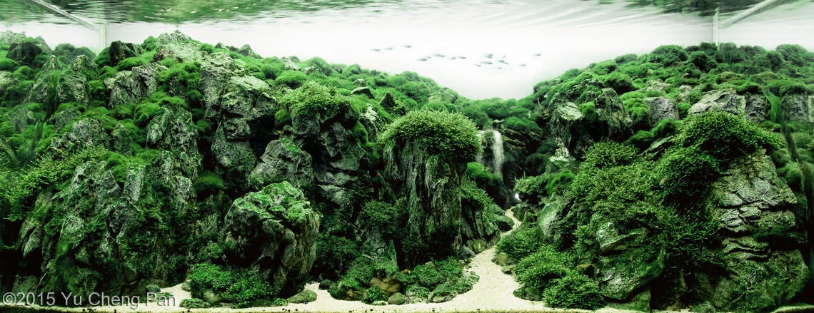 aquascaping inspiration contest