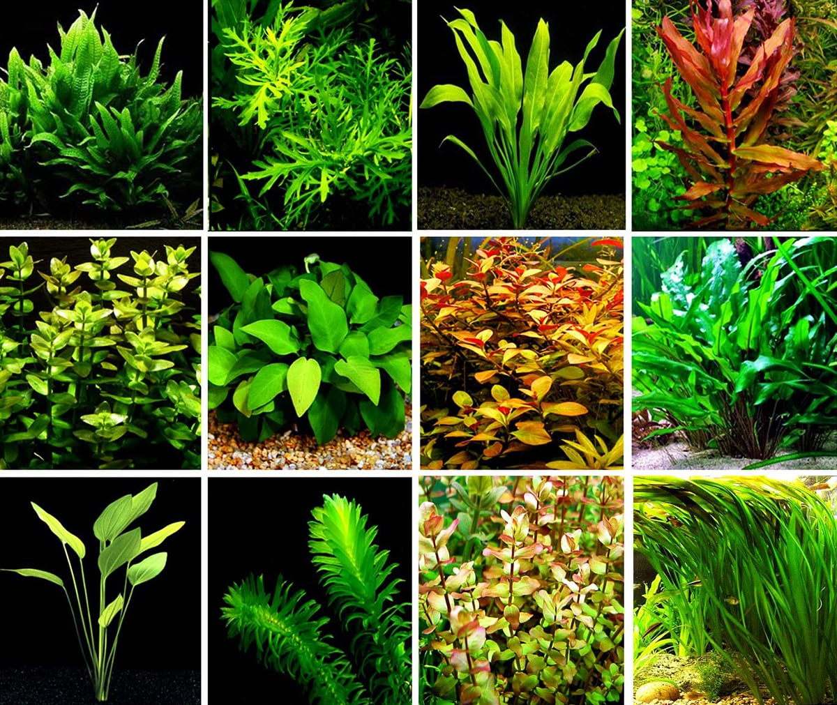 aquascaping-aquarium-plants
