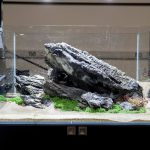 ukaps-Aquascaping-Experience-2016-10