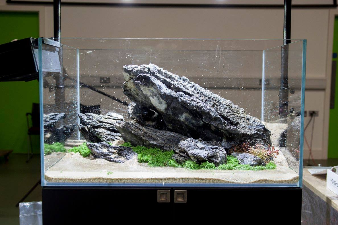 ... Aquascaping Experience Event 2016 - A Conclusion ? Aquascaping Love
