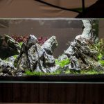 ukaps-Aquascaping-Experience-2016-24