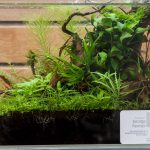 ukaps-Aquascaping-Experience-2016-26