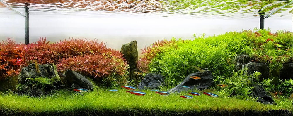 Aquarium Plant Fertilizers Used in Aquascaping