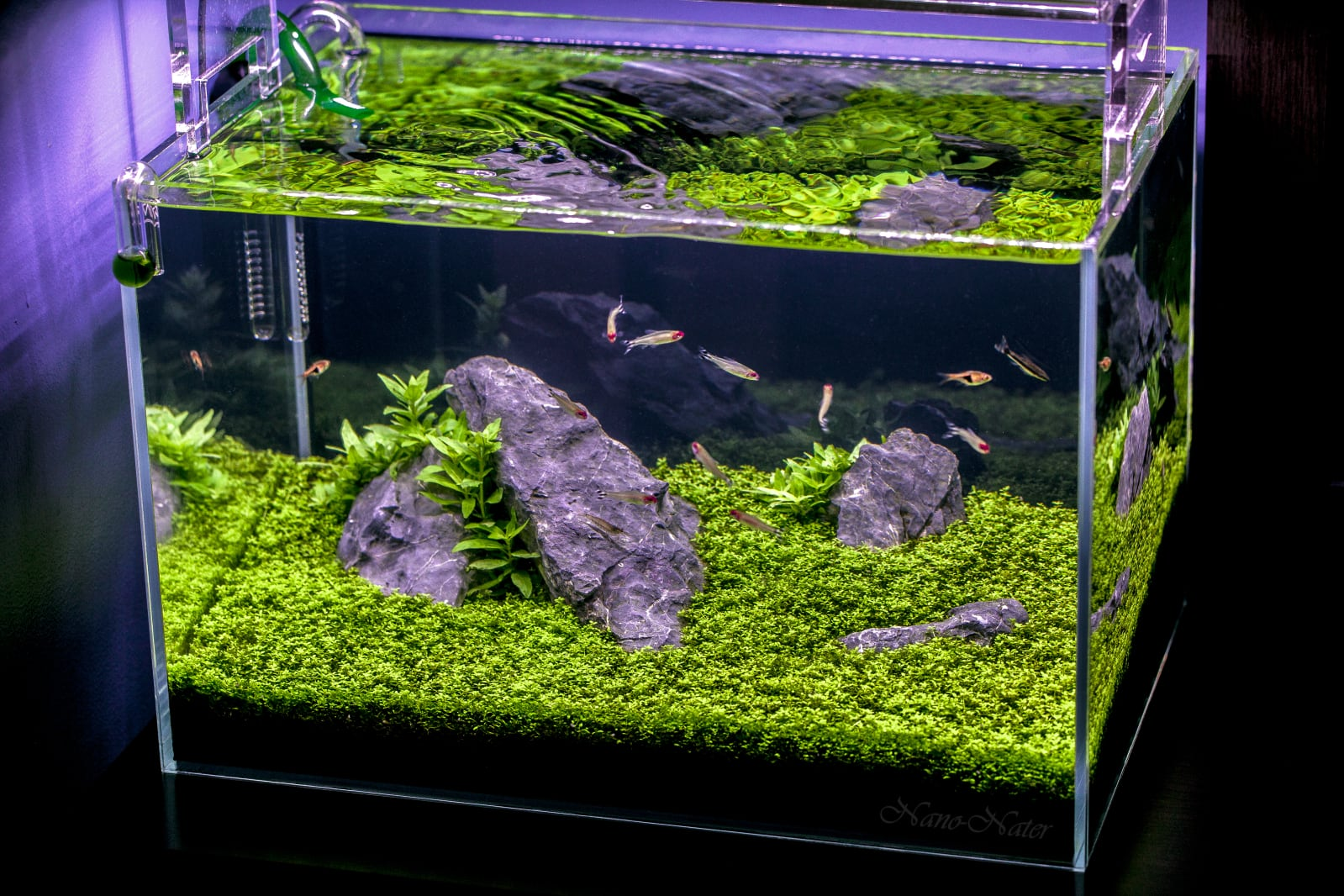 Hemianthus Callitrichoides Hc Cuba Aquarium Plant An Aquascaper S Challenge Aquascaping Love