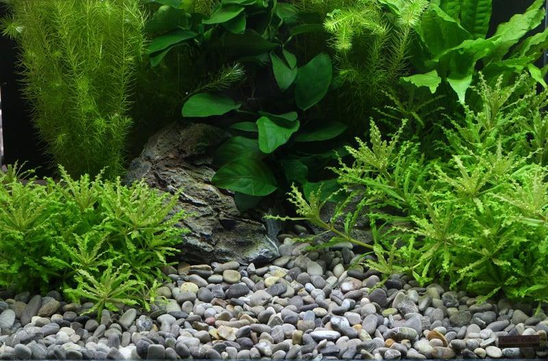 Planted Aquarium Hardscape Essentials Part 1 Sand Gravel Aquascaping Love