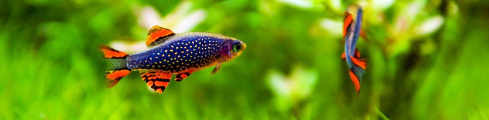 Aquascaping Tips How To Create Your First Aquascape Aquascaping Love