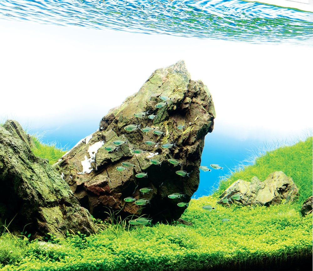 Aquascaping Rocks Planted Aquarium Hardscape Essentials Part 2 Aquascaping Love