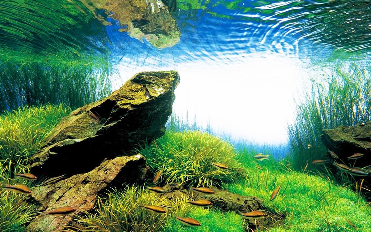 Takashi Amano - Creator of the Nature Aquarium ...