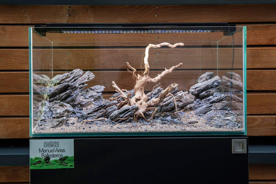 UKAPS Aquascaping Experience Event 2016 - A Conclusion ...