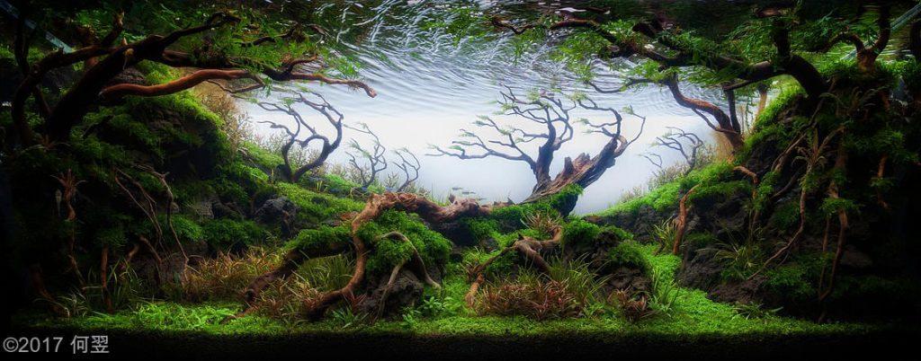 Aquarium Driftwood Used In Aquascaping Hardscape Essentials Part 3 Aquascaping Love