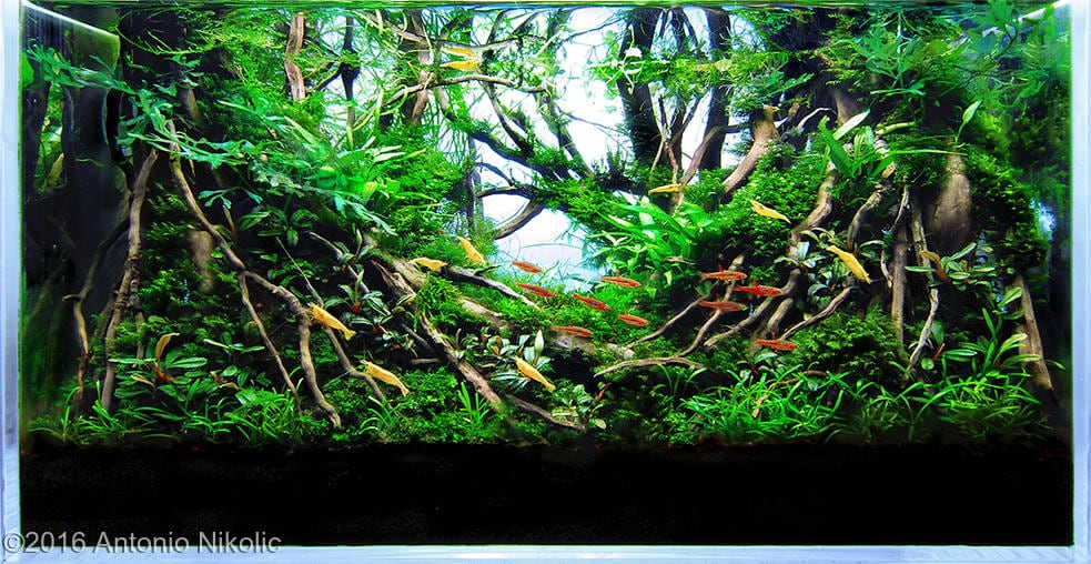 Aquarium Driftwood Used In Aquascaping Hardscape Essentials Part 3 Aquascaping Love
