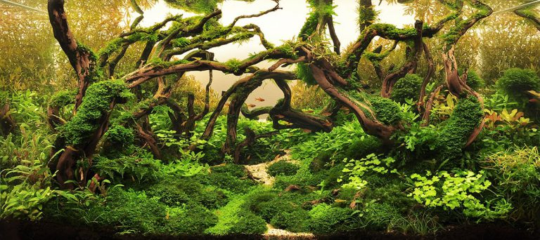 How To Win An Aquascaping Contest Aquascaping Love