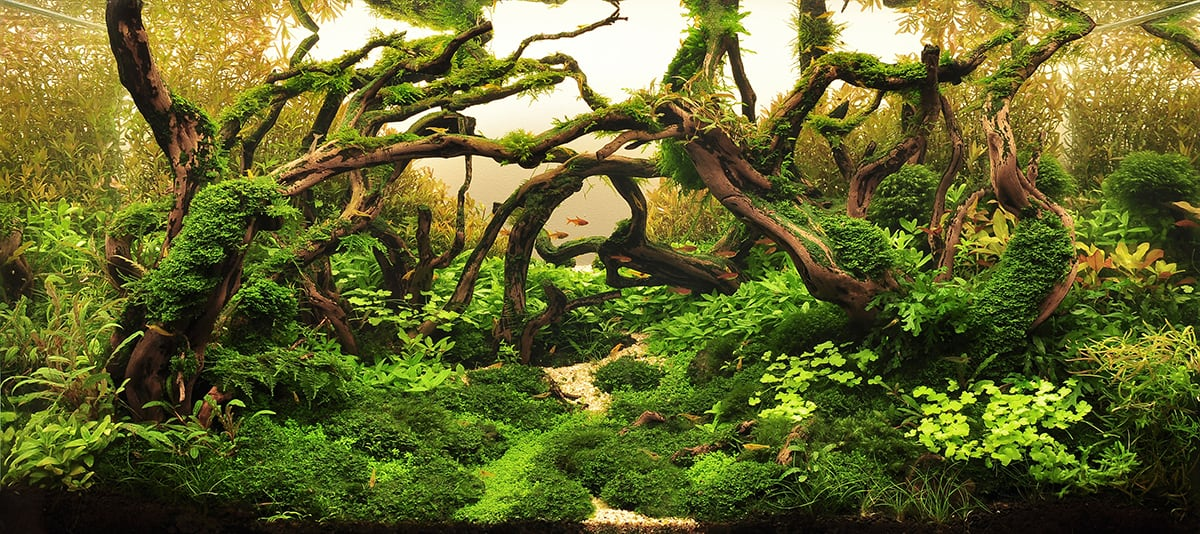 Hardscape Archives Aquascaping Love
