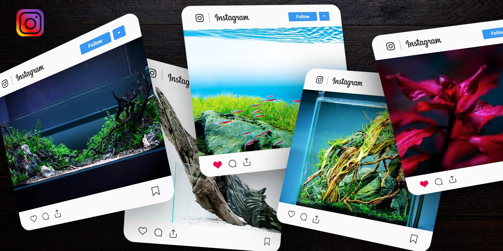 instagram aquascapers aquascaping