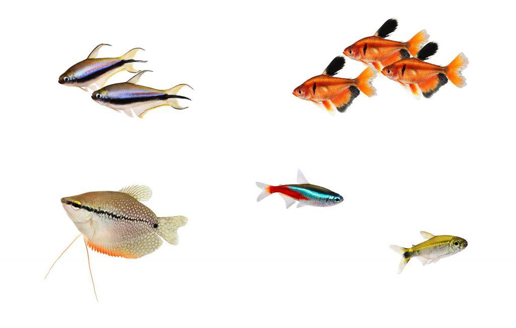 aquascaping tropical fish