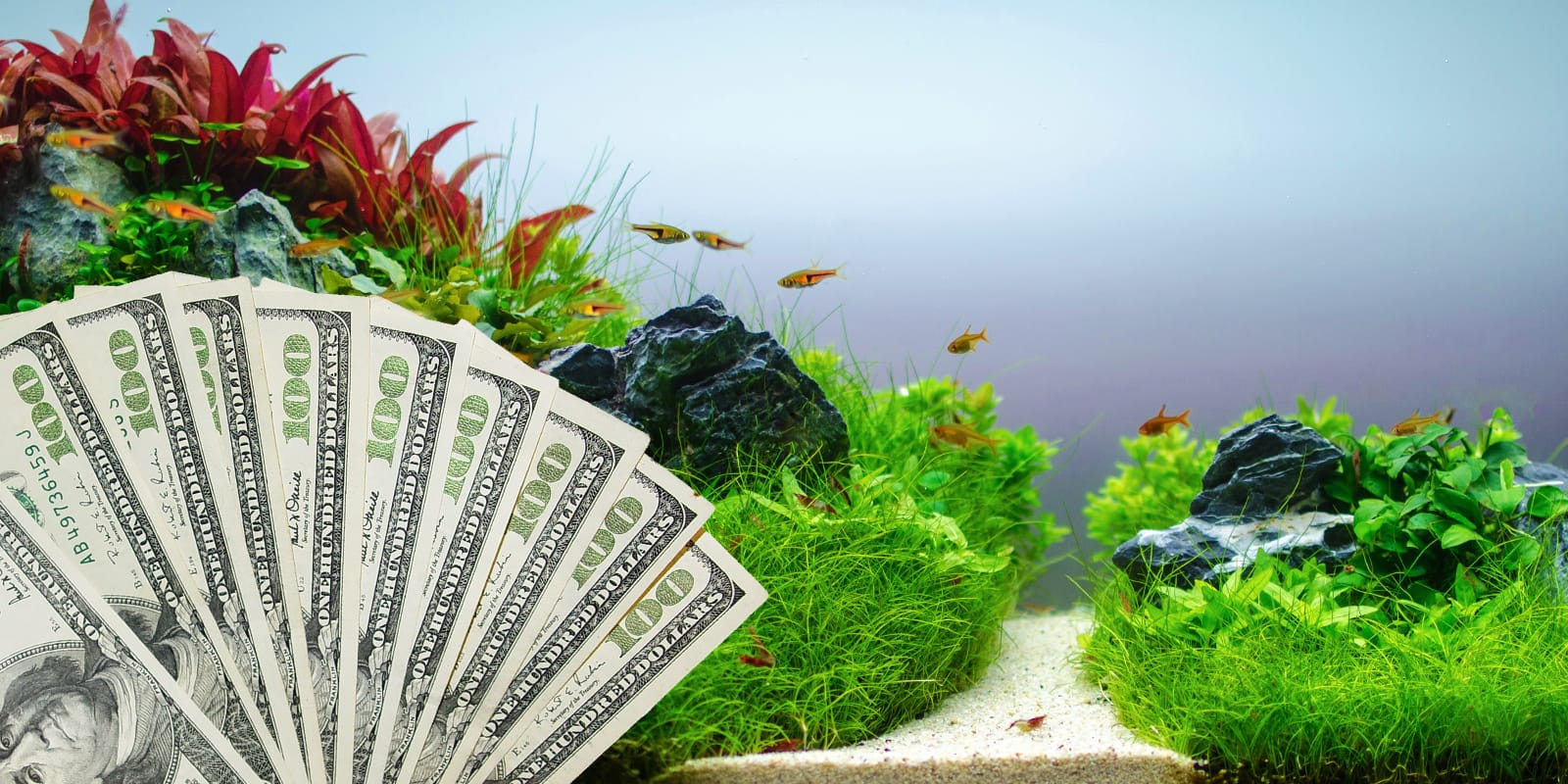 how much does it really cost to create an aquascape aquarium