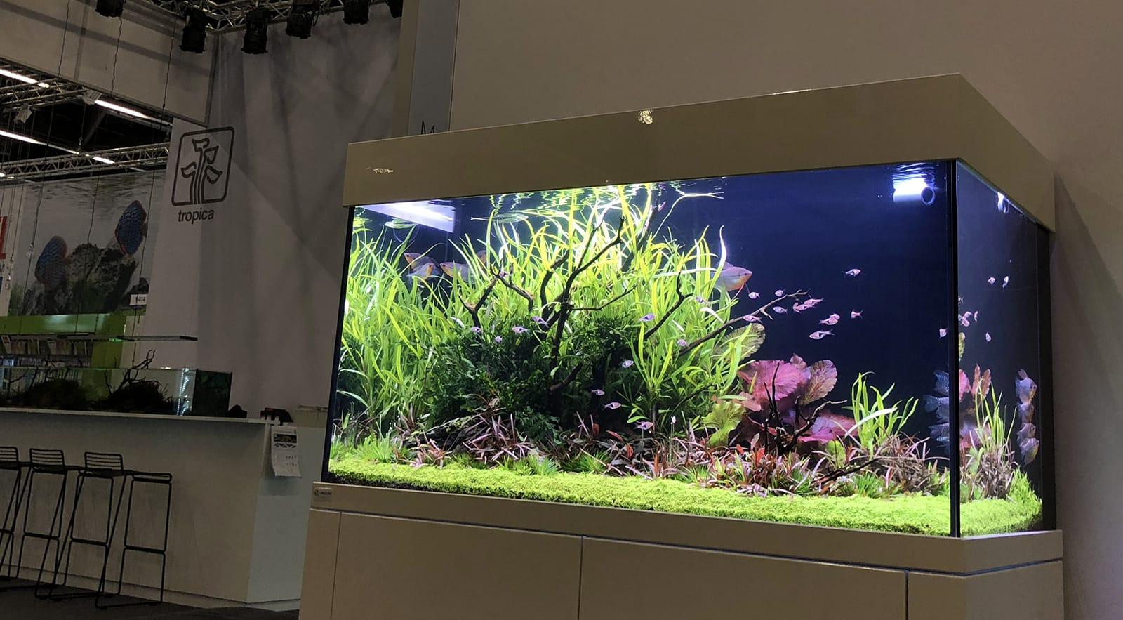 Jurijs Aquascaping Interview