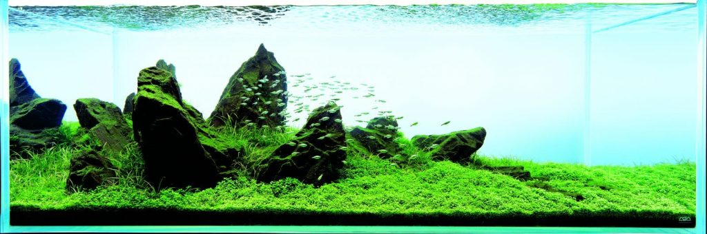 Aquascaping For Beginners 10 Helpful Tips Aquascaping Love
