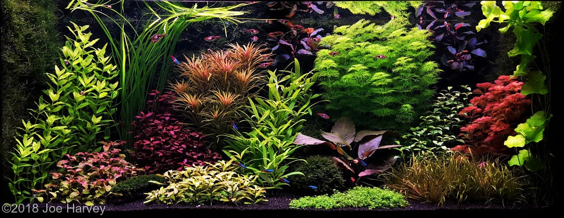 Dutch Aquarium Aquascape: A style from the 1930s ...