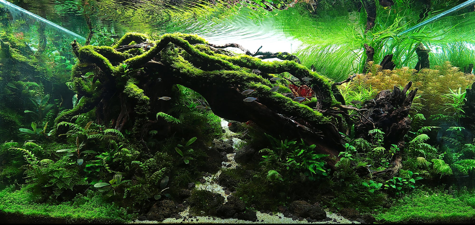 Aquascaping Styles Nature Aquarium Iwagumi Dutch Aquarium Aquascaping Love