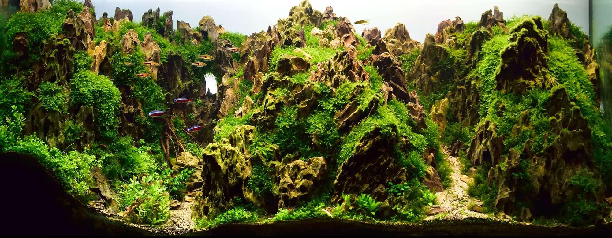 Aquascaping Styles Nature Aquarium Iwagumi Dutch Aquarium Aquascaping Love