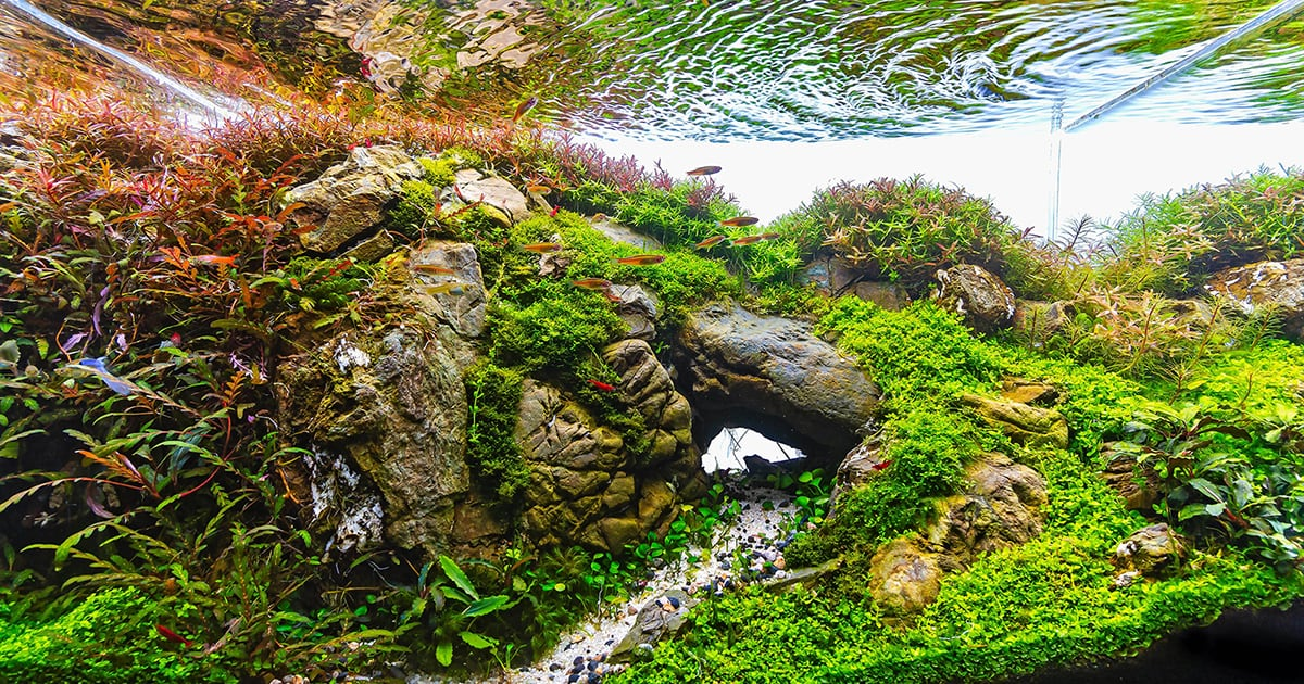 What Is Aquascaping Aquascaping Love