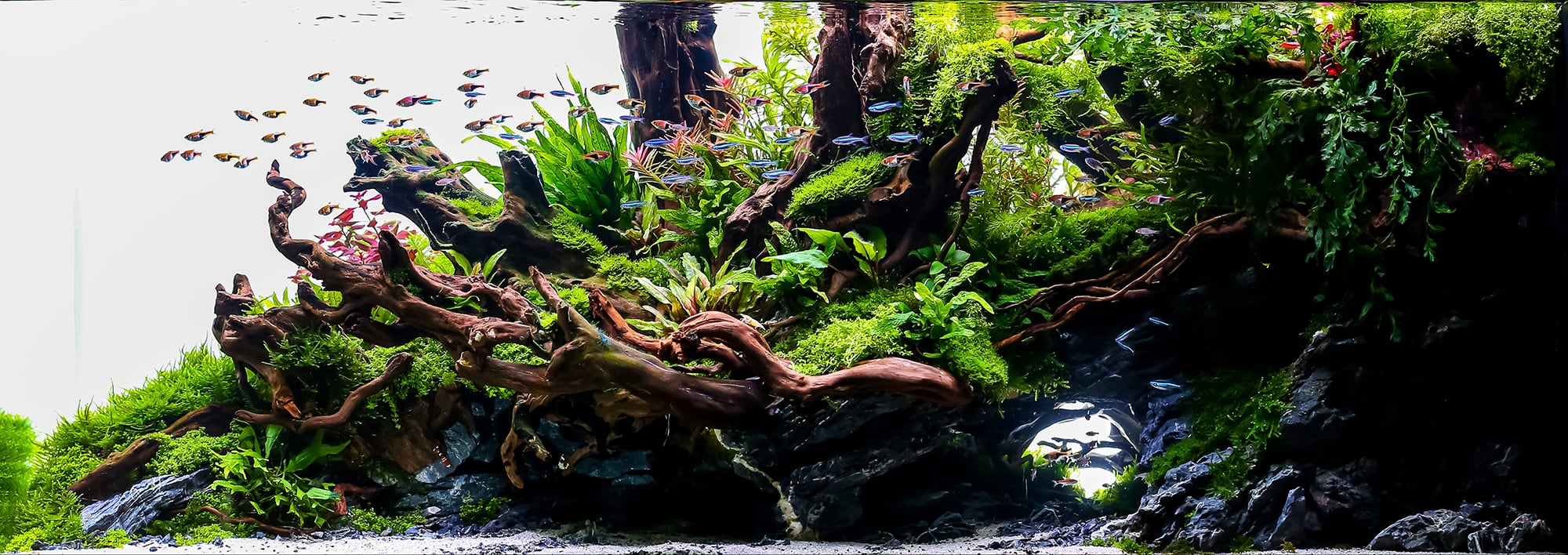 What is Aquascaping? - Aquascaping Love