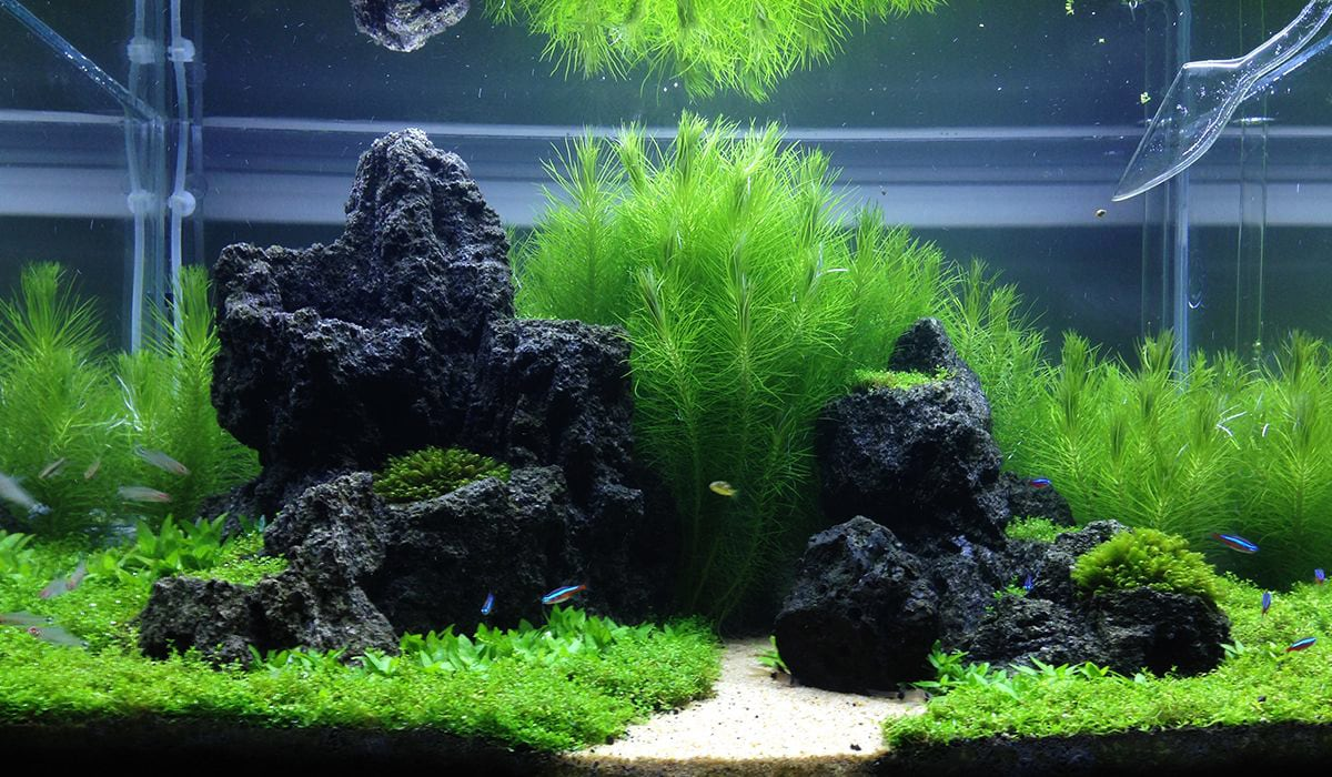 The Elements of Aquascaping: Rocks, Driftwood & Substrates ...